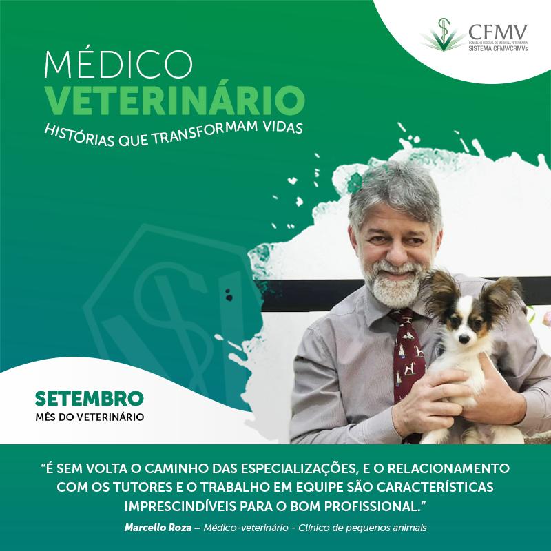 Médico-veterinário na clínica de pequenos animais
