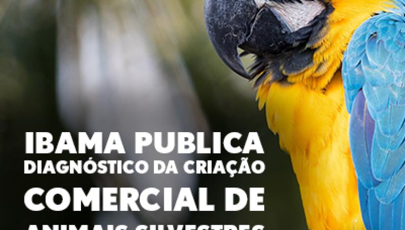 05022020_ibama publica diaginóstico da criação comercial de animais silvestris no brasil portal
