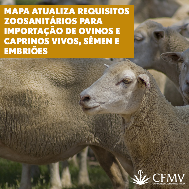 Mapa atualiza requisitos zoosanitários para importação de ovinos e caprinos vivos, sêmen e embriões