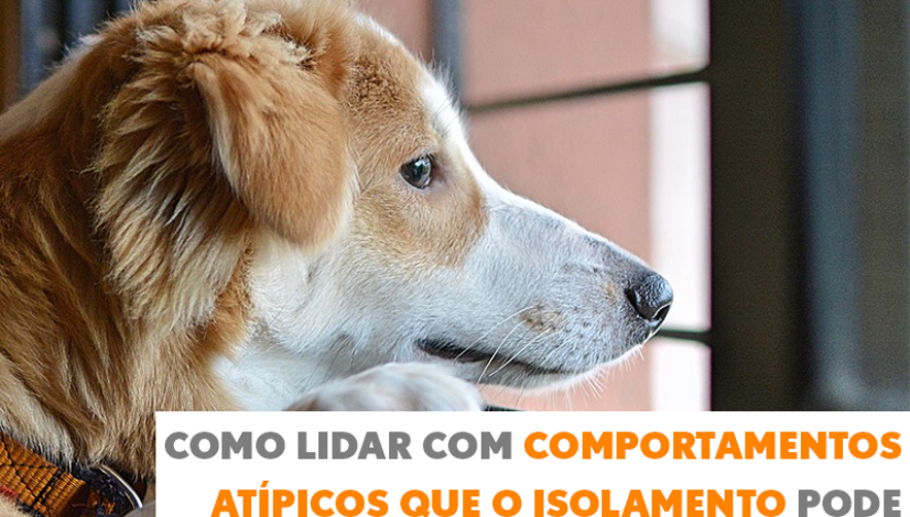 Como lidar com comportamentos atípicos que o isolamento pode causar aos pets