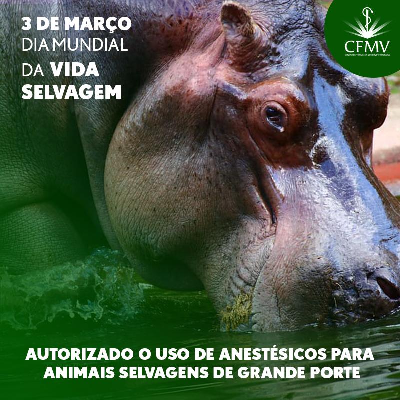 Dia Mundial da Vida Selvagem – Autorizado o uso de anestésicos para animais selvagens de grande porte