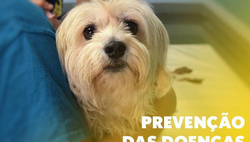 Março Amarelo – Prevenção das doenças renais em cães e gatos