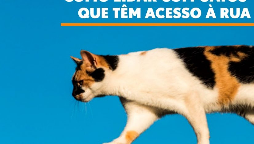 Como lidar com gatos que têm acesso à rua