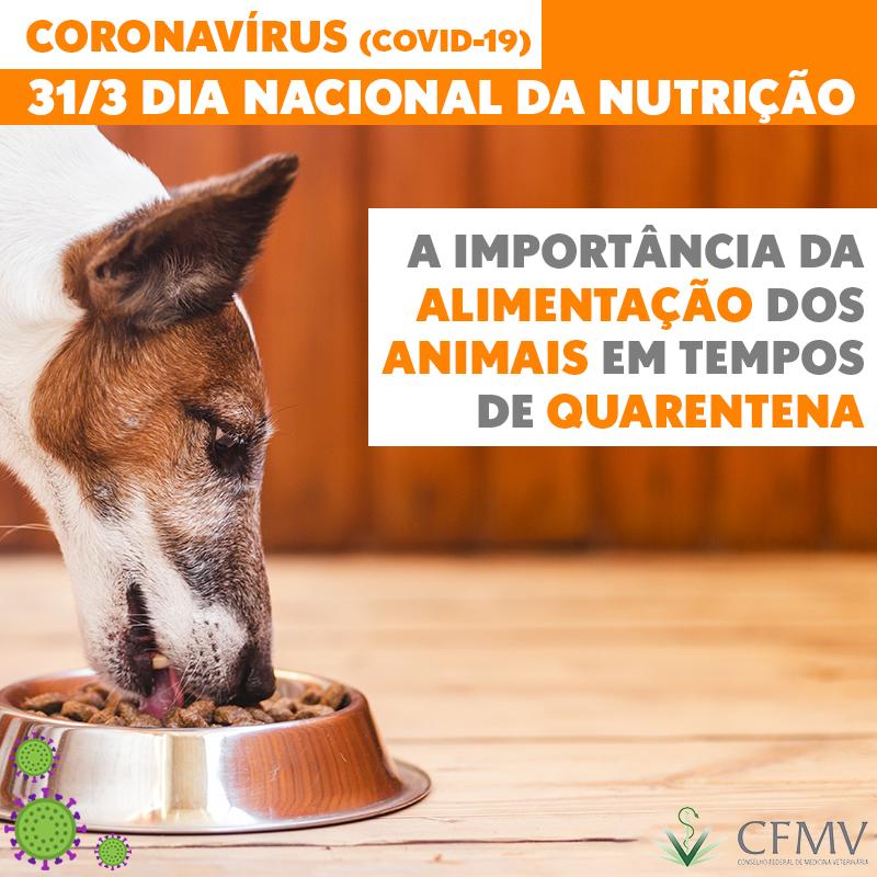 Dia Nacional da Nutrição e a importância da alimentação dos animais em tempos de quarentena