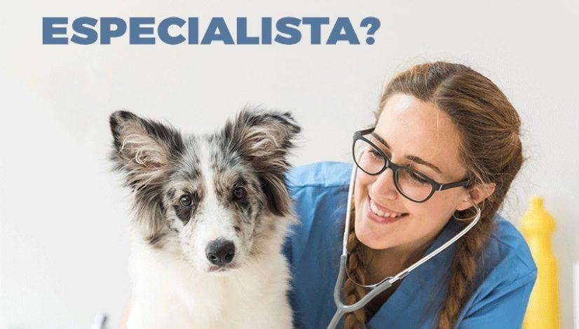 Por que ser um médico-veterinário especialista?