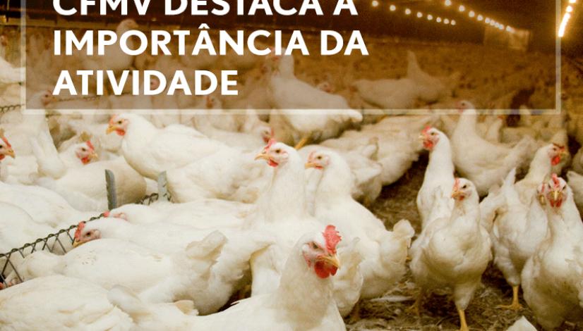 No Dia da Avicultura, CFMV destaca a importância da atividade