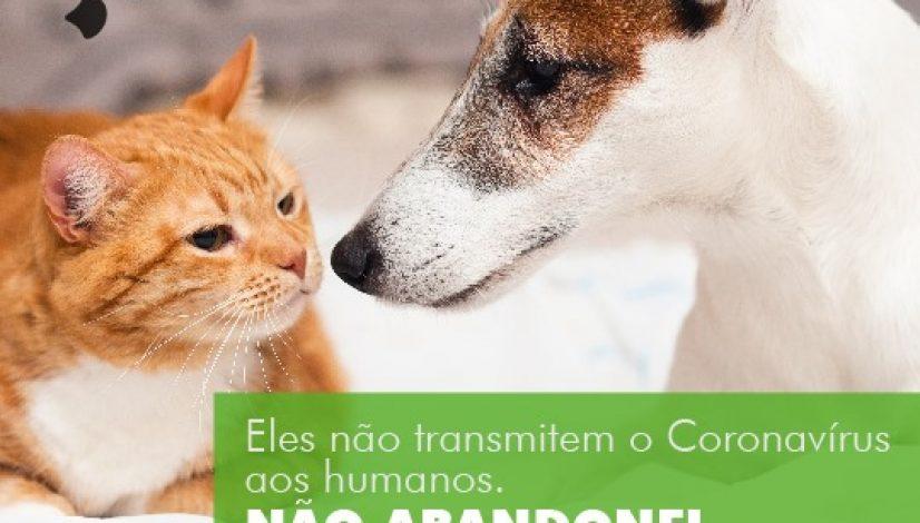 Animais não transmitem o coronavírus aos humanos. Não abandone!