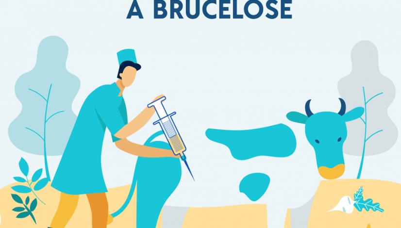 Vacinação contra brucelose já tem cadastramento on-line para médicos-veterinários