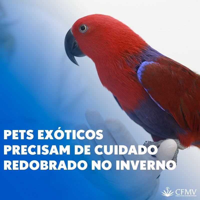 Pets exóticos precisam de cuidado redobrado no inverno