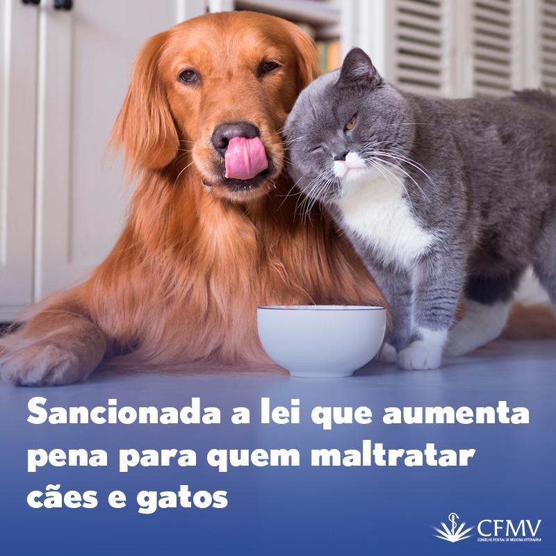 Sancionada a lei que aumenta pena para quem maltratar cães e gatos