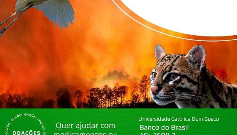CRMV-MS lança campanha para ajudar animais silvestres vítimas de incêndio no Pantanal