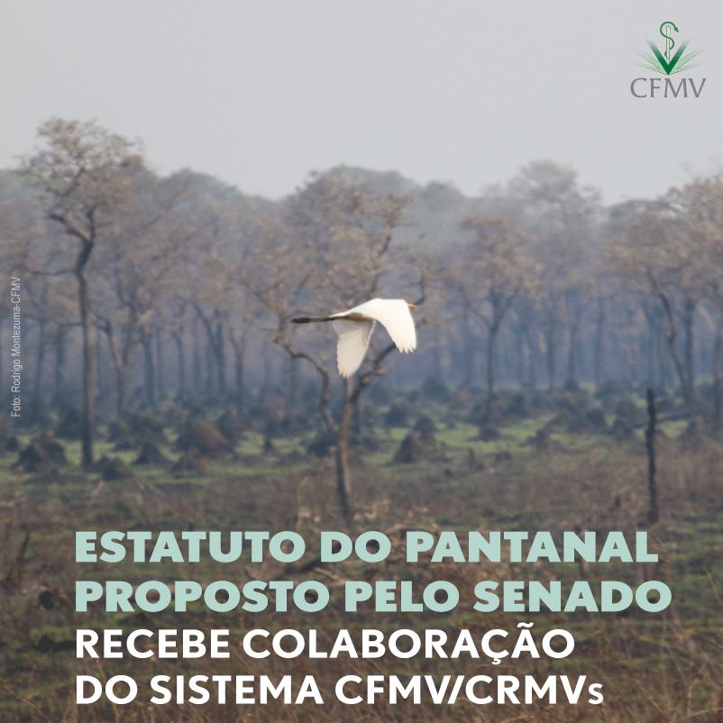Estatuto do Pantanal proposto pelo Senado recebe colaboração do Sistema CFMV/CRMVs
