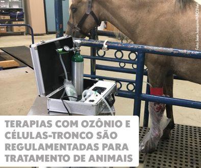 Terapias com ozônio e células-tronco são regulamentadas para tratamento de animais