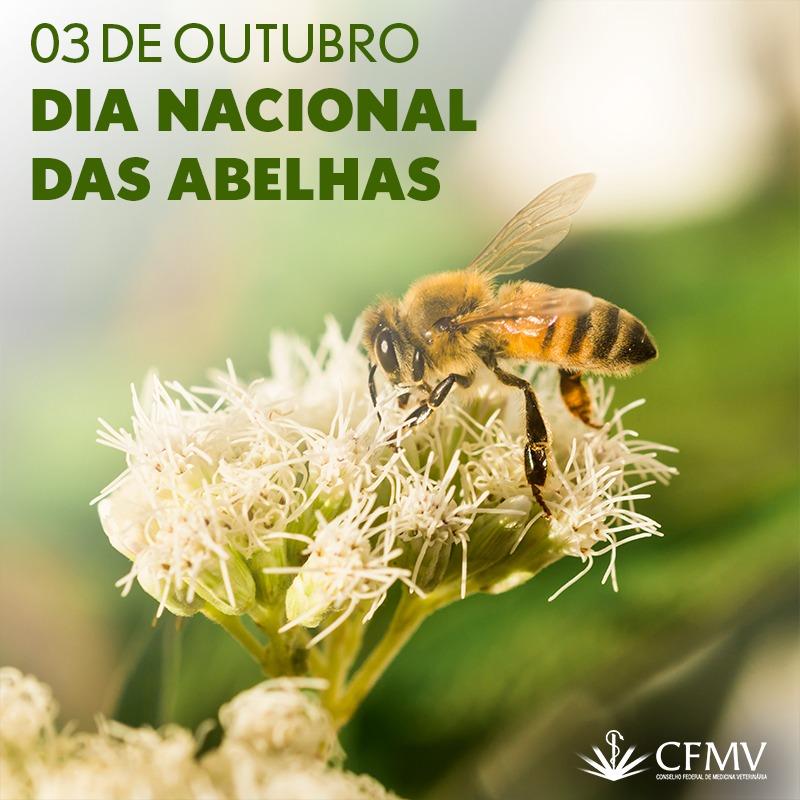 3 de outubro: Dia Nacional das Abelhas