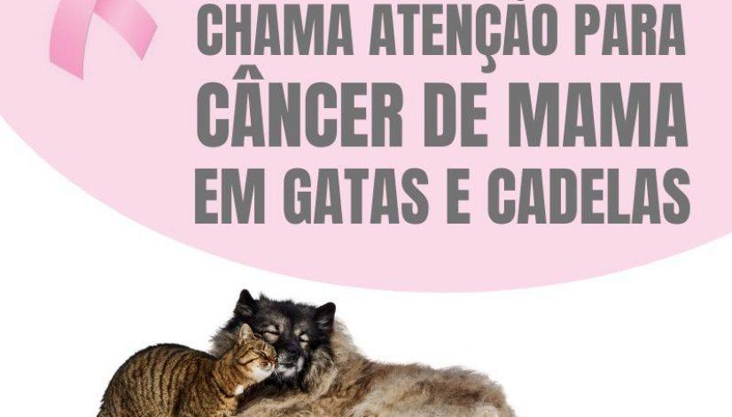 Outubro Rosa chama atenção para câncer de mama em cadelas e gatas