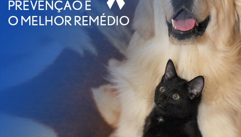 Novembro Azul: prevenção é o melhor remédio para evitar câncer de próstata em cães