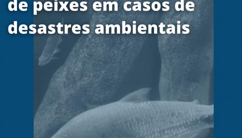 Manual orienta resgate de peixes em casos de desastres ambientais