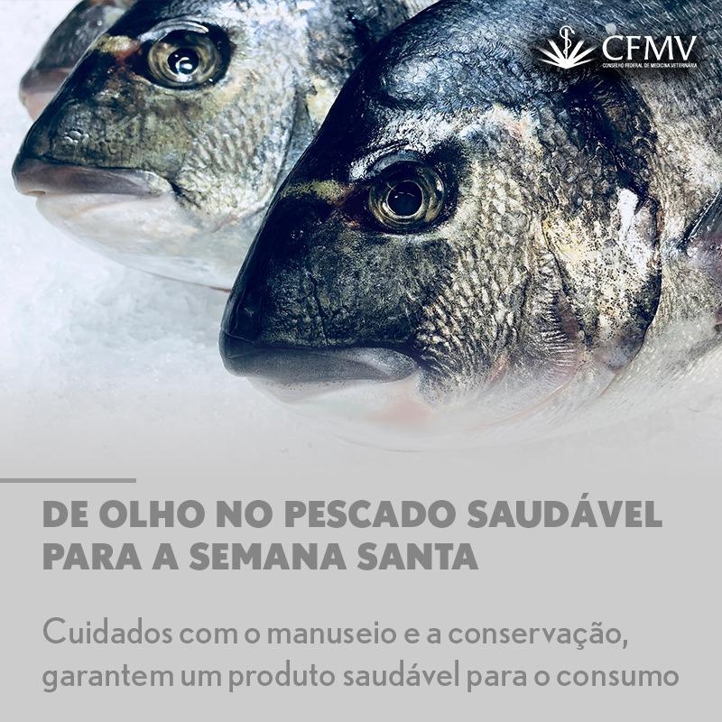 De olho no pescado saudável para a Semana Santa