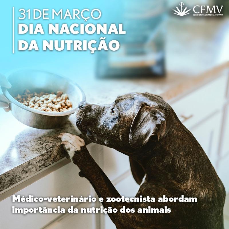 Dia Nacional da Nutrição 31 de março