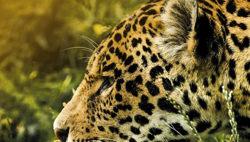 dia mundial da vida selvagem 2
