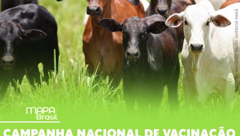 Campanha nacional de vacinação contra a febre aftosa começa no dia 1° de maio