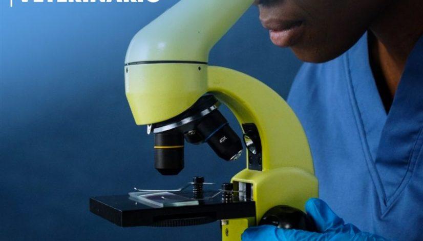 Patologista Veterinário