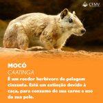 Dia da Defesa da Fauna 2