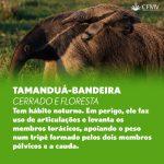 Dia da Defesa da Fauna 3