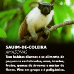 Dia da Defesa da Fauna 4